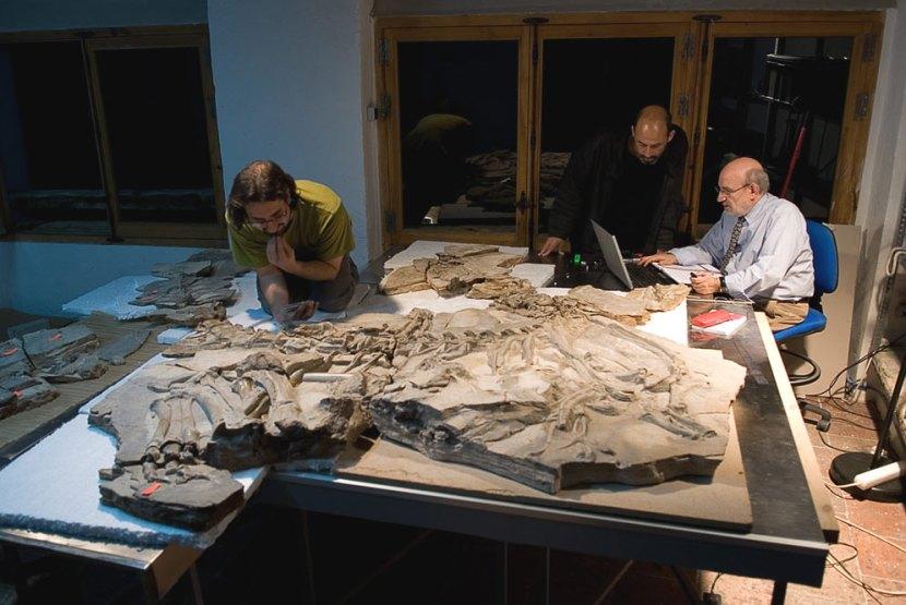 fosil_concavenator_Pepito_descubierto_Cuenca