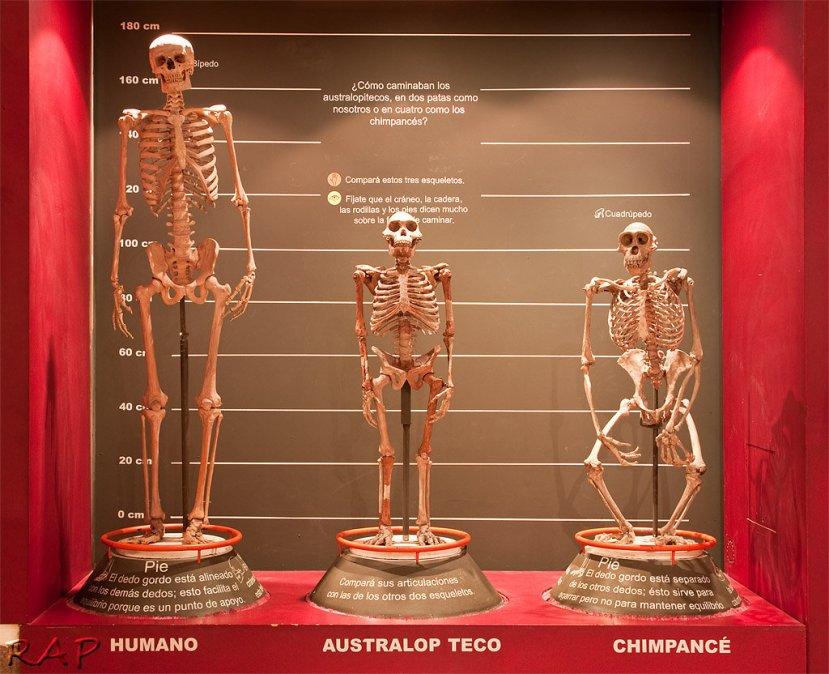 Museo_Argentino_de_Ciencias_Naturales_Bernardino_Rivadavia