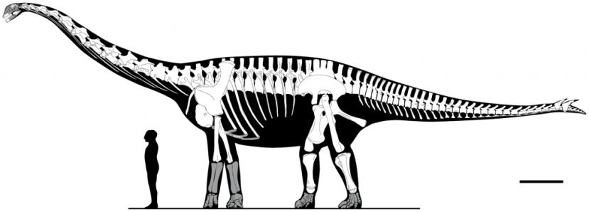 sauropod-cartoon-1024x368